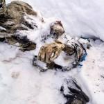 alpinista-puebla-6032015-2